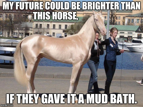 Shiny Horse | MY FUTURE COULD BE BRIGHTER THAN THIS HORSE, IF THEY GAVE IT A MUD BATH. | image tagged in shiny horse | made w/ Imgflip meme maker
