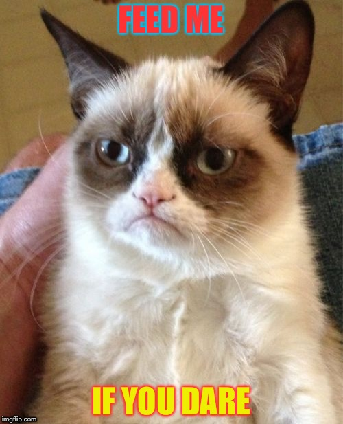 Grumpy Cat Meme | FEED ME IF YOU DARE | image tagged in memes,grumpy cat | made w/ Imgflip meme maker