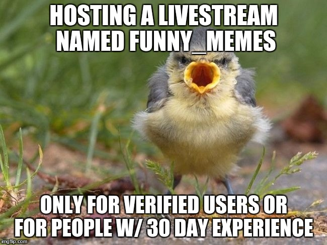 Find It In The Home Page Or Anywhere you see it.  | HOSTING A LIVESTREAM NAMED FUNNY_MEMES ONLY FOR VERIFIED USERS OR FOR PEOPLE W/ 30 DAY EXPERIENCE | image tagged in bird shout | made w/ Imgflip meme maker
