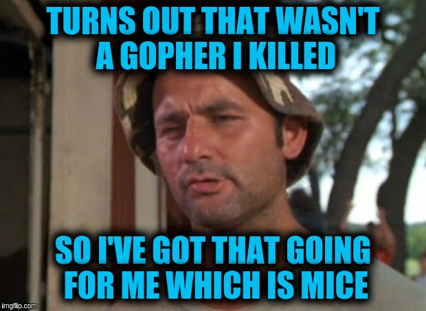 So I Got That Goin For Me Which Is Nice Meme | TURNS OUT THAT WASN'T A GOPHER I KILLED SO I'VE GOT THAT GOING FOR ME WHICH IS MICE | image tagged in memes,so i got that goin for me which is nice | made w/ Imgflip meme maker