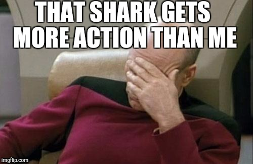 Captain Picard Facepalm Meme | THAT SHARK GETS MORE ACTION THAN ME | image tagged in memes,captain picard facepalm | made w/ Imgflip meme maker