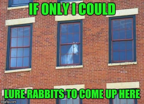 Memes     horse  | IF ONLY I COULD LURE RABBITS TO COME UP HERE | image tagged in memes     horse | made w/ Imgflip meme maker