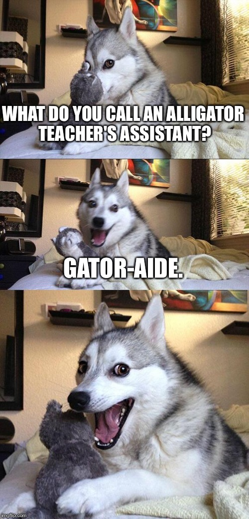 Gator-aide | WHAT DO YOU CALL AN ALLIGATOR TEACHER'S ASSISTANT? GATOR-AIDE. | image tagged in memes,bad pun dog,alligator,gatorade,unhelpful teacher,angry teacher | made w/ Imgflip meme maker