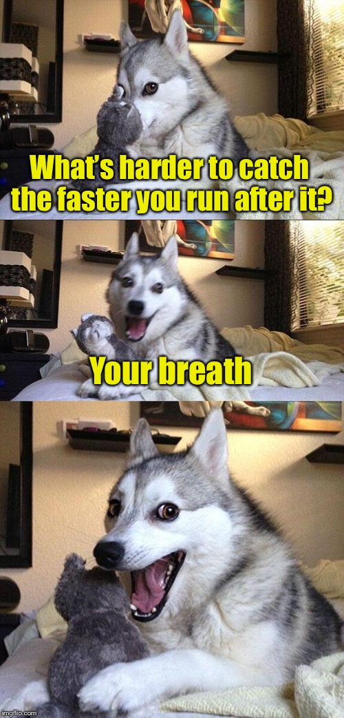 Bad Pun Dog Meme | What's harder to catch the faster you run after it? Your breath | image tagged in memes,bad pun dog | made w/ Imgflip meme maker