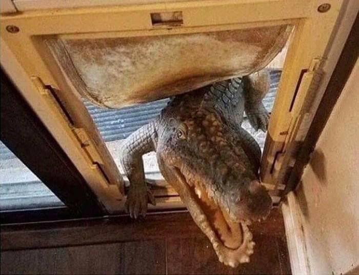Croc Godzilla Door Cat Door Dog Door Blank Template Imgflip