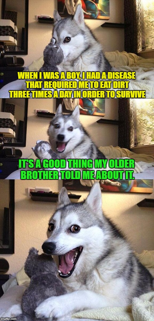 Bad Pun Dog Meme | WHEN I WAS A BOY, I HAD A DISEASE THAT REQUIRED ME TO EAT DIRT THREE TIMES A DAY IN ORDER TO SURVIVE IT'S A GOOD THING MY OLDER BROTHER TOLD | image tagged in memes,bad pun dog | made w/ Imgflip meme maker