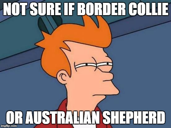 Futurama Fry Meme | NOT SURE IF BORDER COLLIE OR AUSTRALIAN SHEPHERD | image tagged in memes,futurama fry | made w/ Imgflip meme maker
