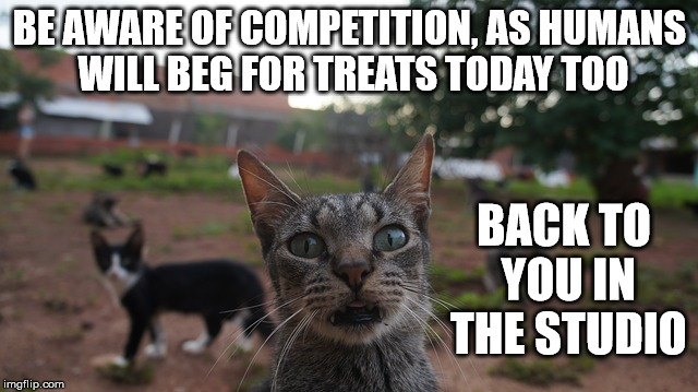 Cheesy Cat Mews | BE AWARE OF COMPETITION, AS HUMANS WILL BEG FOR TREATS TODAY TOO BACK TO YOU IN THE STUDIO | image tagged in memes,cats,halloween,fake news | made w/ Imgflip meme maker