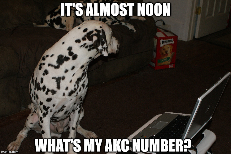 Online entries | IT'S ALMOST NOON WHAT'S MY AKC NUMBER? | image tagged in last minute entry | made w/ Imgflip meme maker