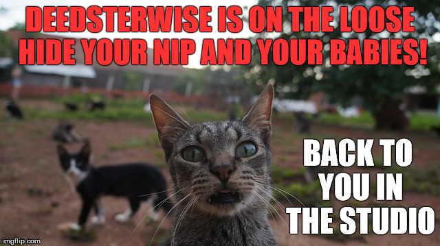 DEEDSTERWISE IS ON THE LOOSE HIDE YOUR NIP AND YOUR BABIES! BACK TO YOU IN THE STUDIO | made w/ Imgflip meme maker