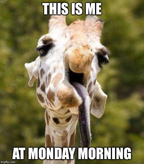 Derp giraffe  | THIS IS ME AT MONDAY MORNING | image tagged in derp giraffe | made w/ Imgflip meme maker