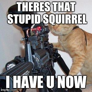 cat with gun | THERES THAT STUPID SQUIRREL I HAVE U NOW | image tagged in cat with gun | made w/ Imgflip meme maker