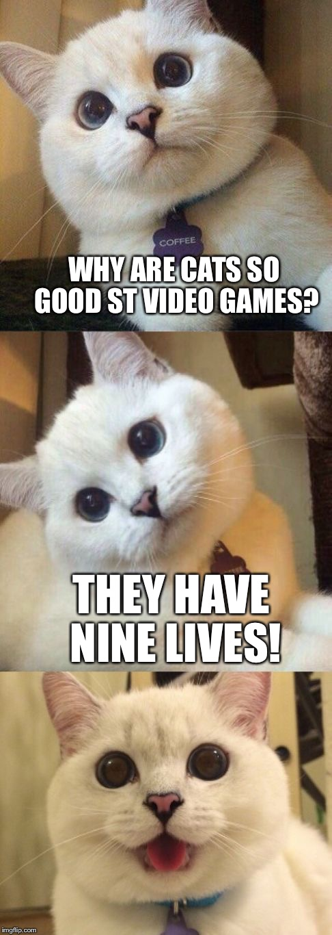 Bad Pun Cat | WHY ARE CATS SO GOOD ST VIDEO GAMES? THEY HAVE NINE LIVES! | image tagged in bad pun cat,memes,did you notice the typo | made w/ Imgflip meme maker