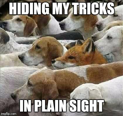 Fox and Foxhounds | HIDING MY TRICKS IN PLAIN SIGHT | image tagged in fox and foxhounds | made w/ Imgflip meme maker