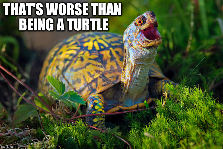 THAT'S WORSE THAN BEING A TURTLE | made w/ Imgflip meme maker