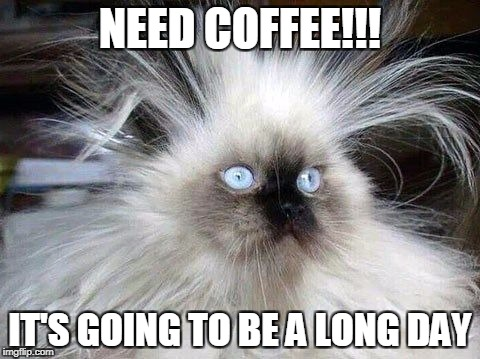 Crazy Hair Cat | NEED COFFEE!!! IT'S GOING TO BE A LONG DAY | image tagged in crazy hair cat | made w/ Imgflip meme maker