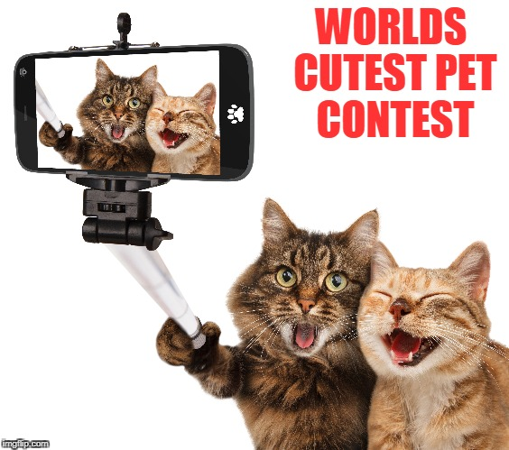 WORLDS CUTEST PET CONTEST | image tagged in cute puppies,cute cat | made w/ Imgflip meme maker