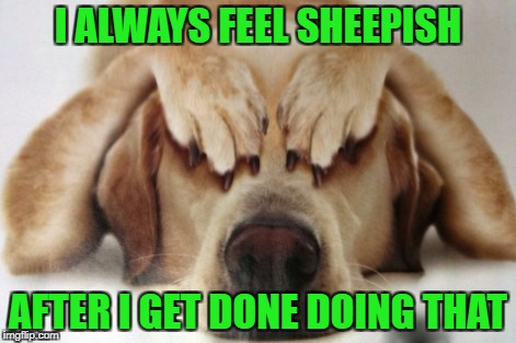 I ALWAYS FEEL SHEEPISH AFTER I GET DONE DOING THAT | made w/ Imgflip meme maker