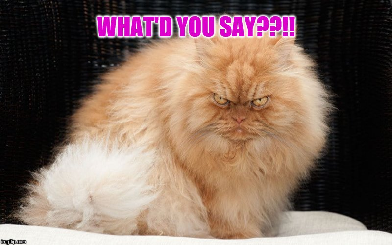Angry Cat - What'd You Say??!! | WHAT'D YOU SAY??!! | image tagged in angry cat,memes,mad cat,funny memes | made w/ Imgflip meme maker