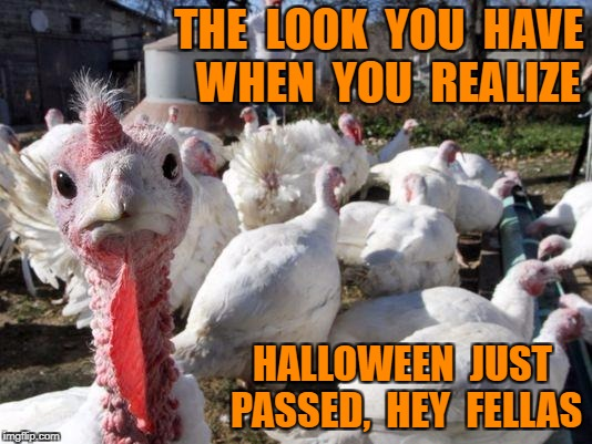 THE  LOOK  YOU  HAVE  WHEN  YOU  REALIZE HALLOWEEN  JUST PASSED,  HEY  FELLAS | image tagged in beer turkey | made w/ Imgflip meme maker