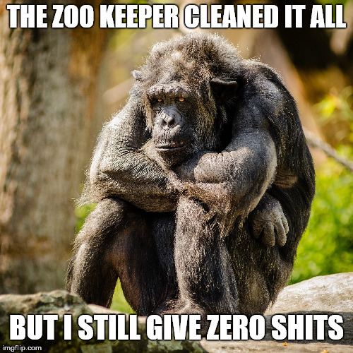 Cheer up Chimp. I'll set you free!  | THE ZOO KEEPER CLEANED IT ALL BUT I STILL GIVE ZERO SHITS | image tagged in memes,chimpanzee,animals,depression,sad,zero fucks given | made w/ Imgflip meme maker