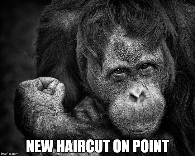 Success Chimp | NEW HAIRCUT ON POINT | image tagged in memes,animals,chimpanzee,success,haircut | made w/ Imgflip meme maker