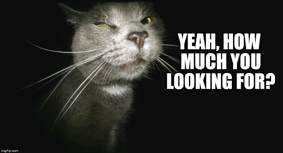 Stalker Cat | YEAH, HOW MUCH YOU LOOKING FOR? | image tagged in stalker cat | made w/ Imgflip meme maker