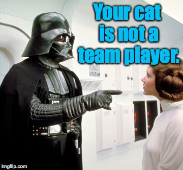 Your cat is not a team player. | made w/ Imgflip meme maker