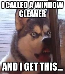 Husky | I CALLED A WINDOW CLEANER AND I GET THIS... | image tagged in husky | made w/ Imgflip meme maker