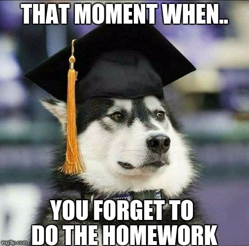 THAT MOMENT WHEN.. YOU FORGET TO DO THE HOMEWORK | image tagged in educated husky | made w/ Imgflip meme maker