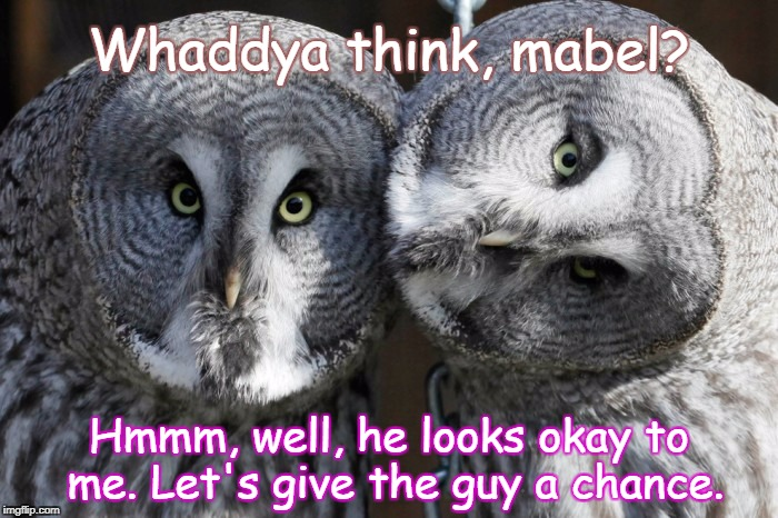 Bob & Mabel | Whaddya think, mabel? Hmmm, well, he looks okay to me. Let's give the guy a chance. | image tagged in friend request,owls,skeptic,trust,family meeting | made w/ Imgflip meme maker