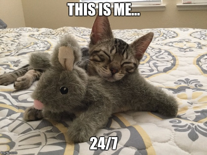 THIS IS ME... 24/7 | image tagged in sleeping kitten | made w/ Imgflip meme maker
