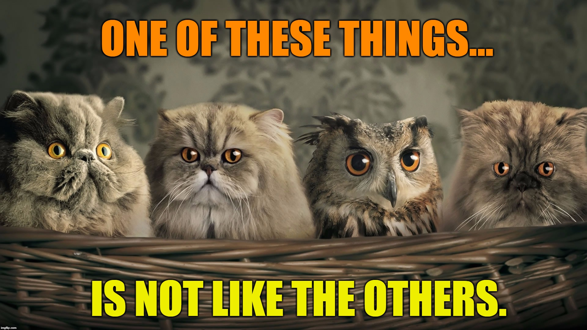 Who Let the Cats Out? | ONE OF THESE THINGS... IS NOT LIKE THE OTHERS. | image tagged in vince vance,cat memes,baby owl,owls,cute animals,cute cats | made w/ Imgflip meme maker