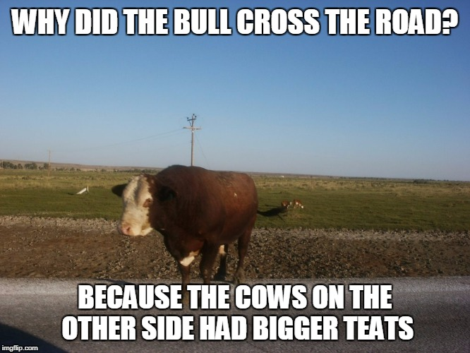 WHY DID THE BULL CROSS THE ROAD? BECAUSE THE COWS ON THE OTHER SIDE HAD BIGGER TEATS | made w/ Imgflip meme maker