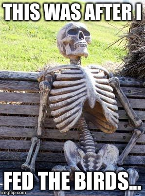 Waiting Skeleton Meme | THIS WAS AFTER I FED THE BIRDS... | image tagged in memes,waiting skeleton | made w/ Imgflip meme maker