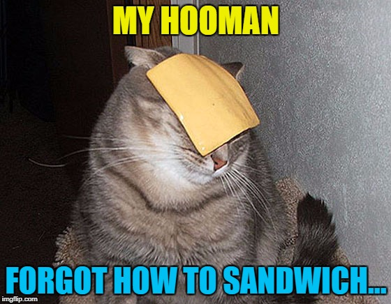 It's easily done... :) | MY HOOMAN FORGOT HOW TO SANDWICH... | image tagged in memes,cats,animals,food,sandwich | made w/ Imgflip meme maker