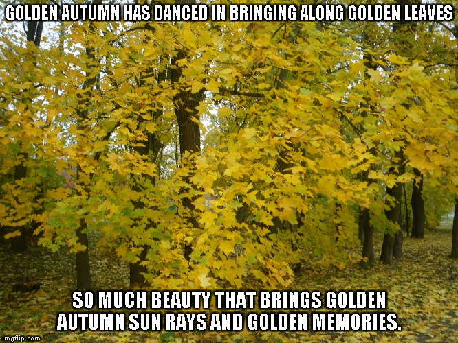 Golden Leaves and Golden Memories | GOLDEN AUTUMN HAS DANCED IN BRINGING ALONG GOLDEN LEAVES SO MUCH BEAUTY THAT BRINGS GOLDEN AUTUMN SUN RAYS AND GOLDEN MEMORIES. | image tagged in autumn,golden leaves,memories | made w/ Imgflip meme maker