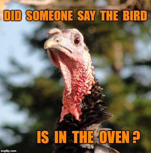 turkey head | DID  SOMEONE  SAY  THE  BIRD IS  IN  THE  OVEN ? | image tagged in turkey head | made w/ Imgflip meme maker
