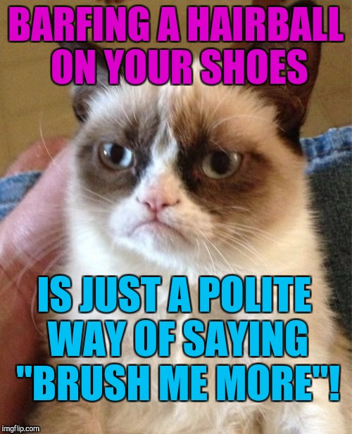 "See the message not just the mess. :D | BARFING A HAIRBALL ON YOUR SHOES IS JUST A POLITE WAY OF SAYING ""BRUSH ME MORE""! 