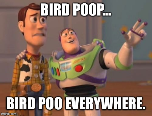 X, X Everywhere Meme | BIRD POOP... BIRD POO EVERYWHERE. | image tagged in memes,x,x everywhere,x x everywhere | made w/ Imgflip meme maker