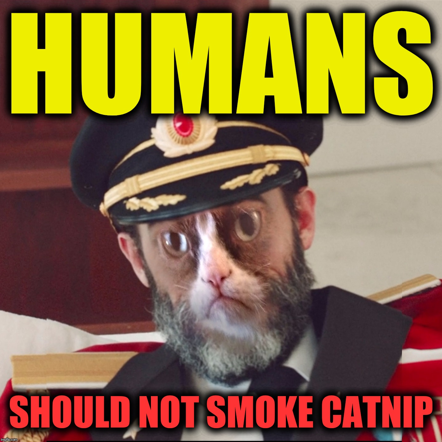 Heed the warning before it's too late | HUMANS SHOULD NOT SMOKE CATNIP | image tagged in cat-pain obvious,cat nip,sirmemealot is awesome,warning | made w/ Imgflip meme maker