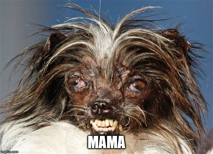 ugly dog | MAMA | image tagged in ugly dog | made w/ Imgflip meme maker