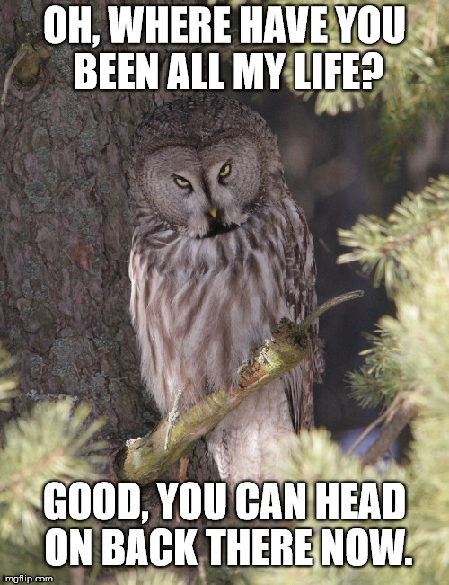 Owl O' Rage | OH, WHERE HAVE YOU BEEN ALL MY LIFE? GOOD, YOU CAN HEAD ON BACK THERE NOW. | image tagged in memes,animals,owl,insult,go away | made w/ Imgflip meme maker