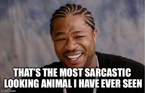 Yo Dawg Heard You Meme | THAT'S THE MOST SARCASTIC LOOKING ANIMAL I HAVE EVER SEEN | image tagged in memes,yo dawg heard you | made w/ Imgflip meme maker