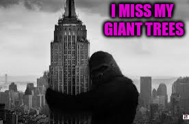 I MISS MY GIANT TREES | made w/ Imgflip meme maker
