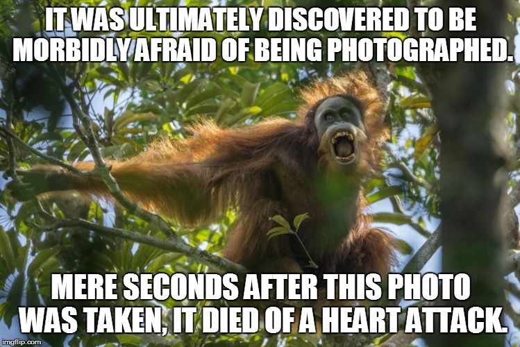 IT WAS ULTIMATELY DISCOVERED TO BE MORBIDLY AFRAID OF BEING PHOTOGRAPHED. MERE SECONDS AFTER THIS PHOTO WAS TAKEN, IT DIED OF A HEART ATTACK | made w/ Imgflip meme maker