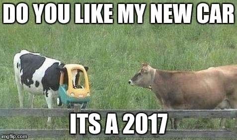 Stupid Cow | DO YOU LIKE MY NEW CAR ITS A 2017 | image tagged in stupid cow | made w/ Imgflip meme maker