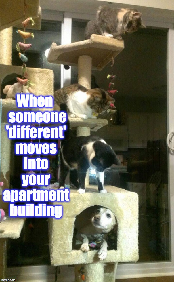 When  someone 'different' moves into your apartment building | image tagged in memes | made w/ Imgflip meme maker