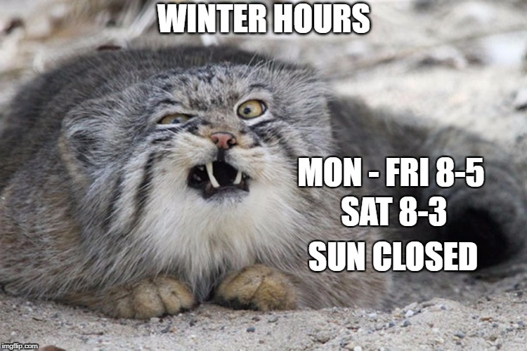 WINTER HOURS MON - FRI 8-5 SAT 8-3 SUN CLOSED | image tagged in winter's cat | made w/ Imgflip meme maker