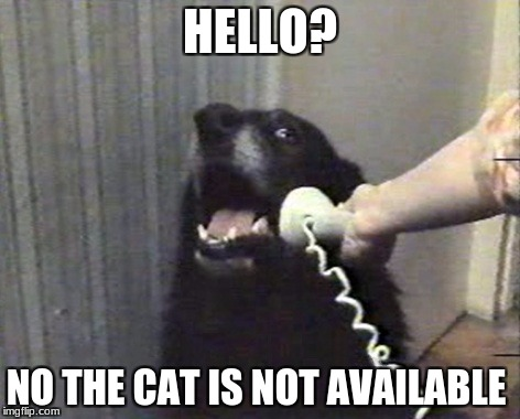 hello this is dog | HELLO? NO THE CAT IS NOT AVAILABLE | image tagged in hello this is dog | made w/ Imgflip meme maker